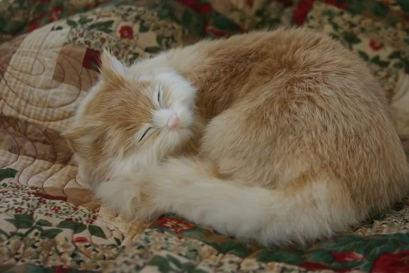 Blog_quilt_cat