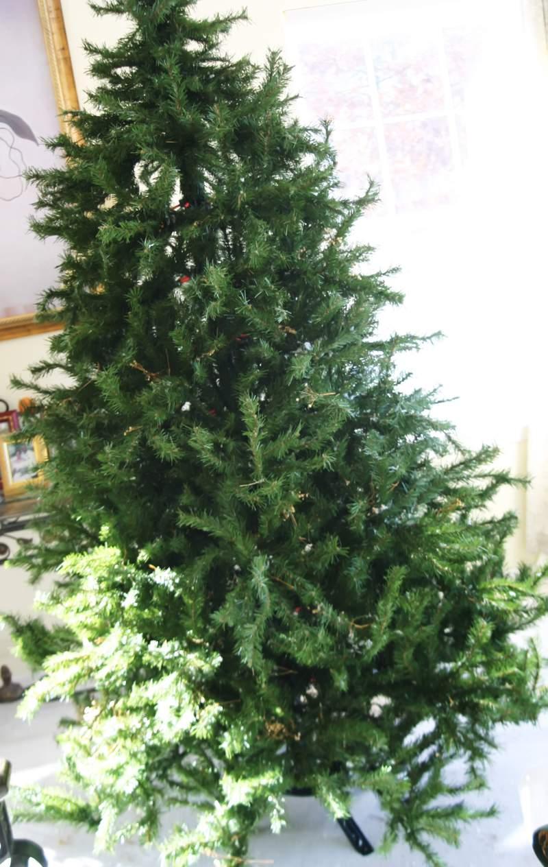 Blog_trimmer_bare_tree