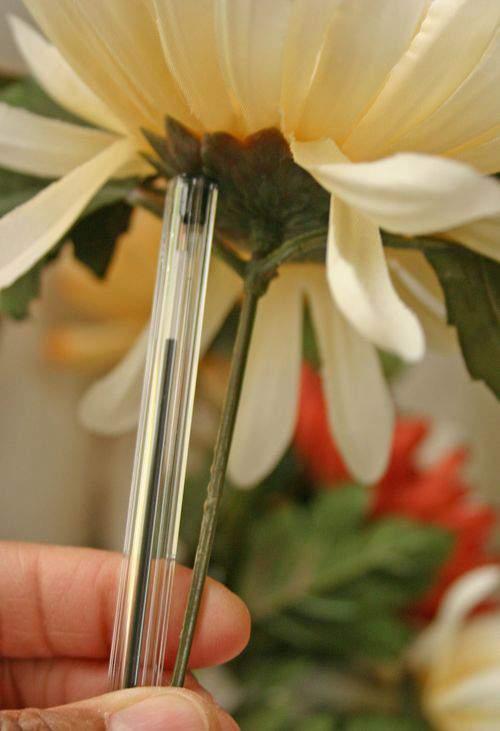 Blog daisies stem