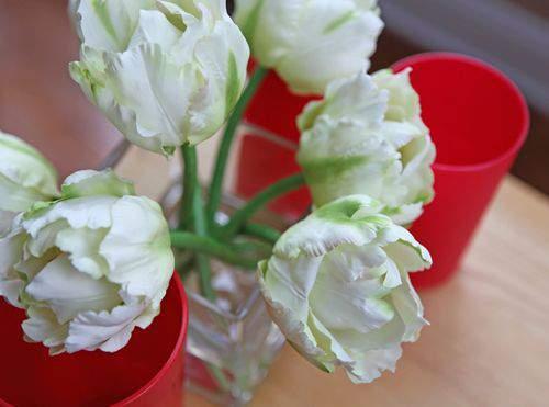Blog tulip support2