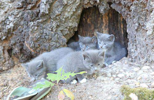 Blog kittens five