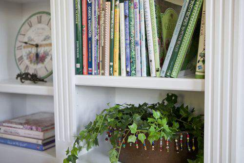 Blog at home with books plant