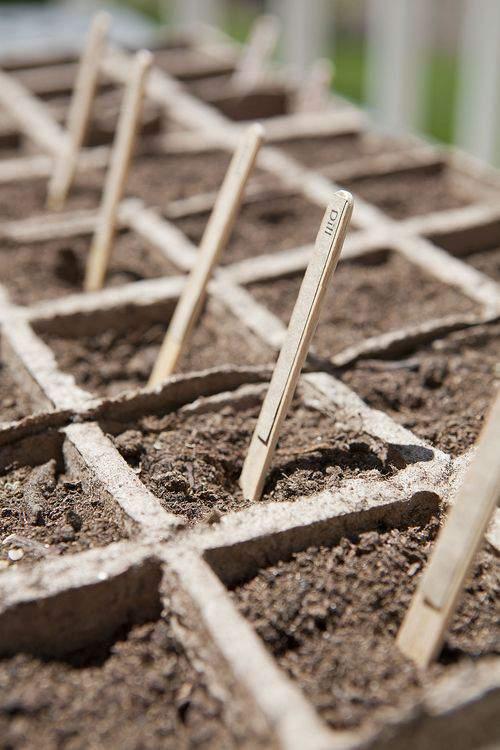 Herb garden soil