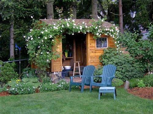 Garden shed roses
