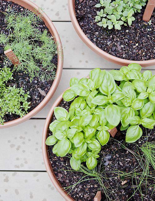 Herb garden bowls