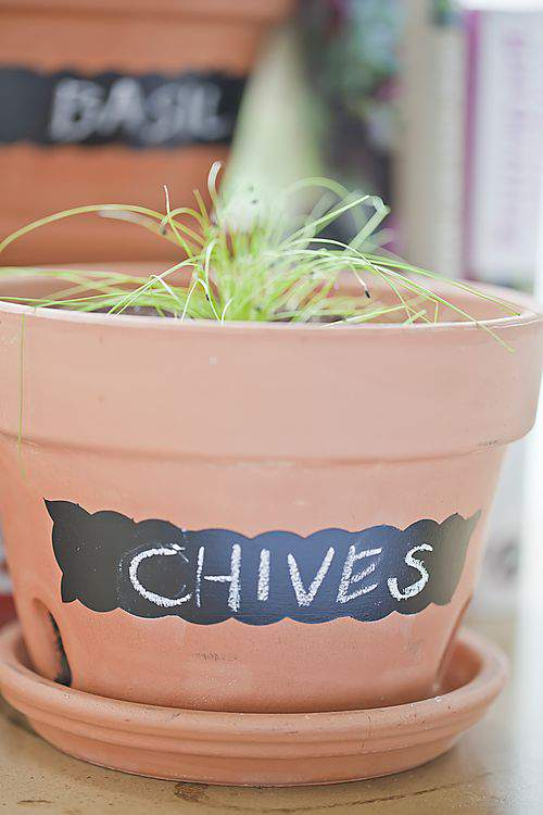Chalkboard pot and Chives