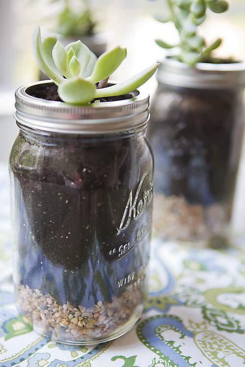 Mason jars with succulent plants