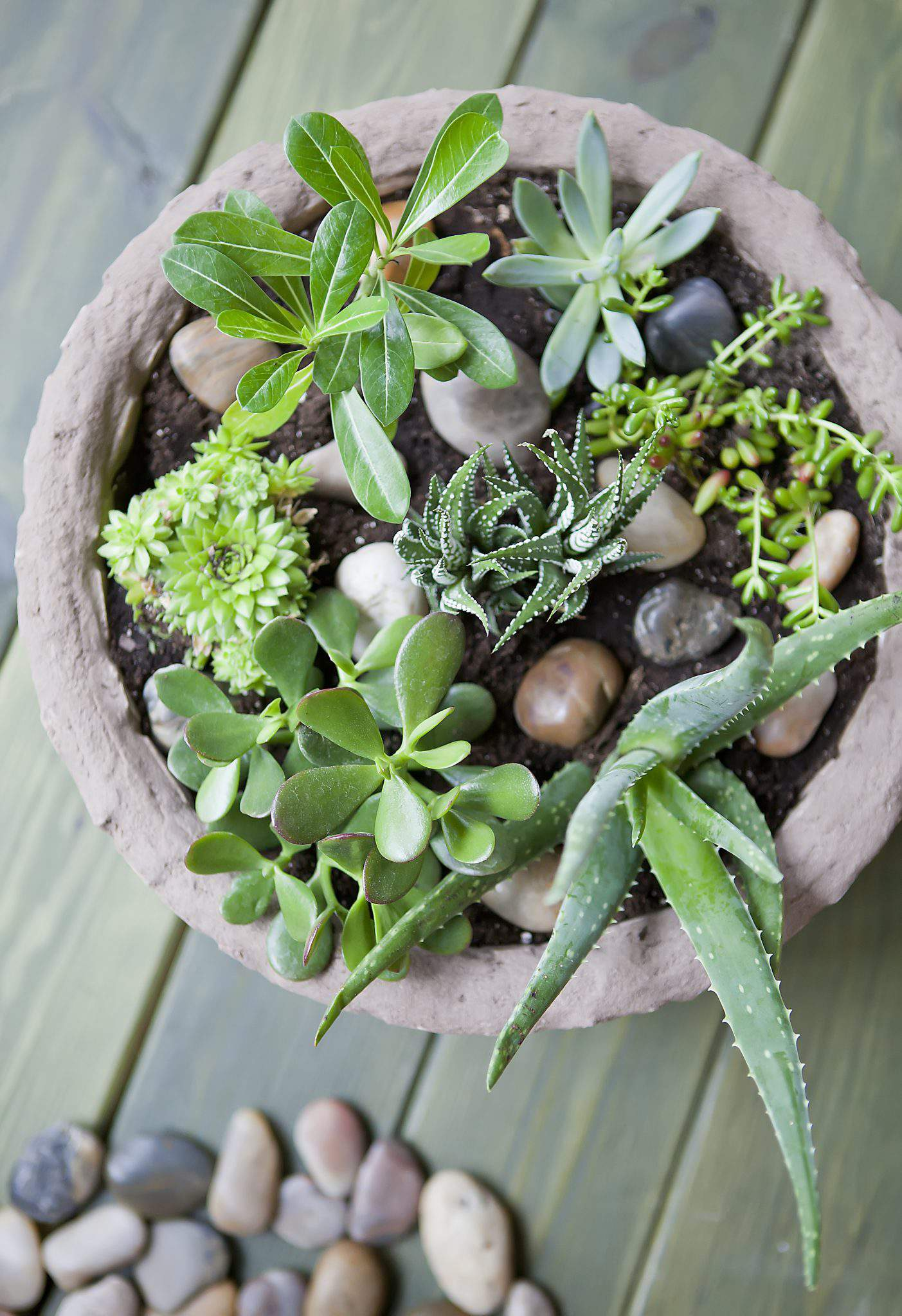 How To Create A Succulent Garden Celebrate Creativity