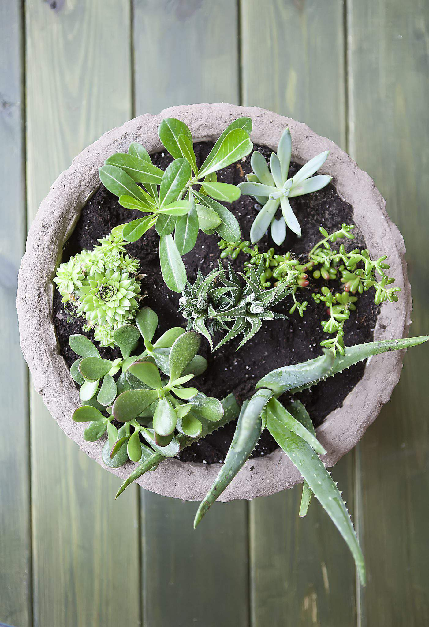 With Summer Quickly Winding Down I M Continuing My End Of The Season Gardening Theme Another Way To Bring Lovely Greenery Indoors