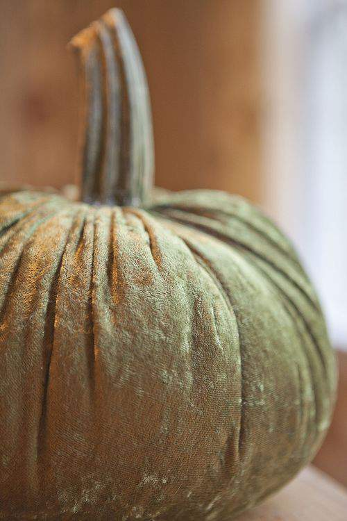 soft pumpkin with stem