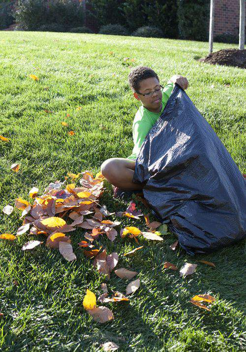 bagging leaves