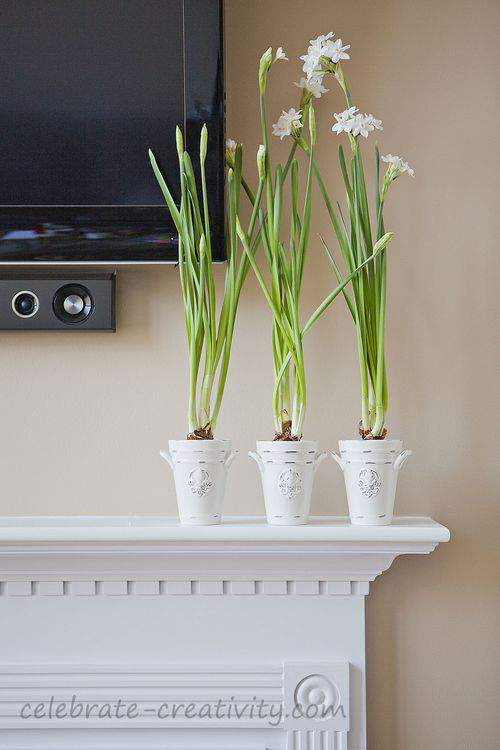 Paperwhites on the fireplace