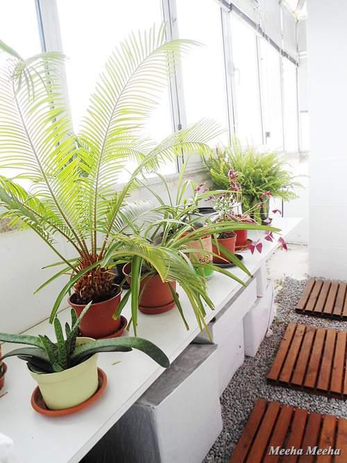 Meeha Meeha Spring Plant Balcony