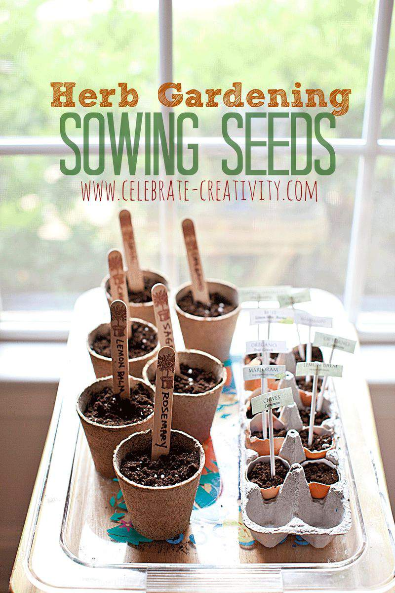 Sowing seeds graphic4