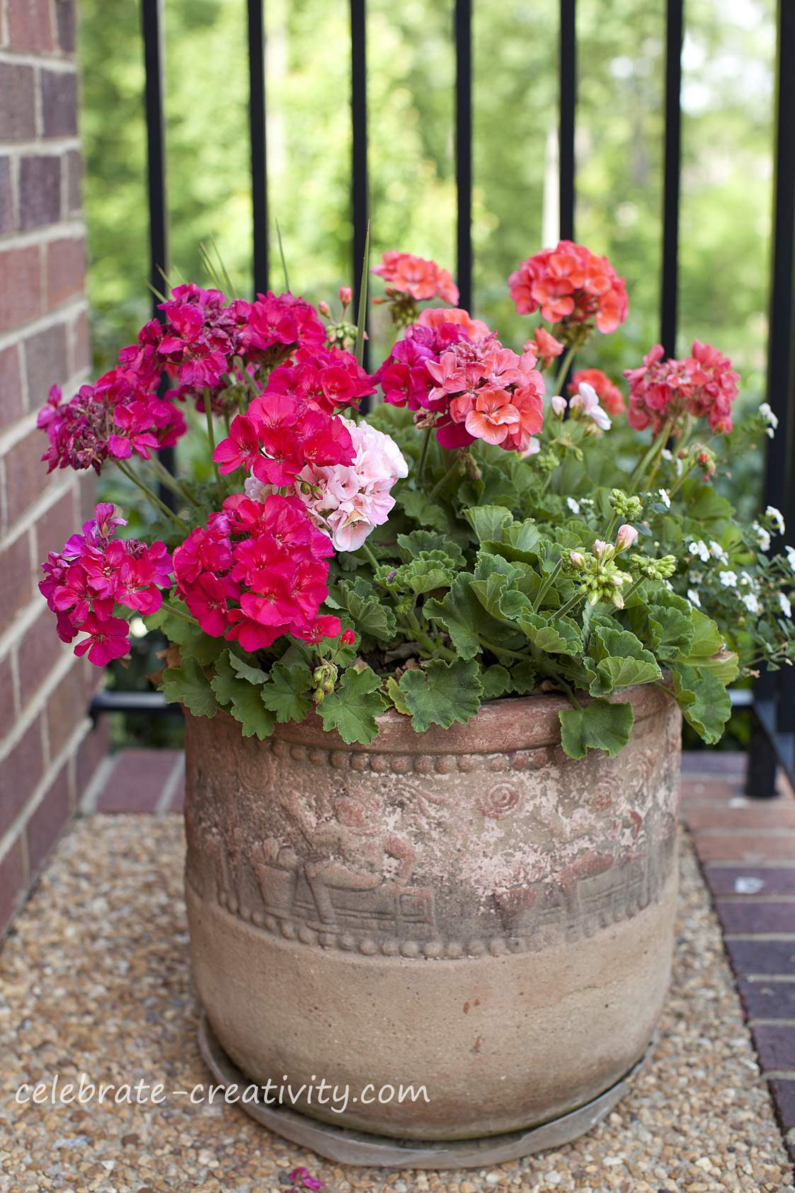 Celebrate creativity - Growing petunias pots balconies porches ...