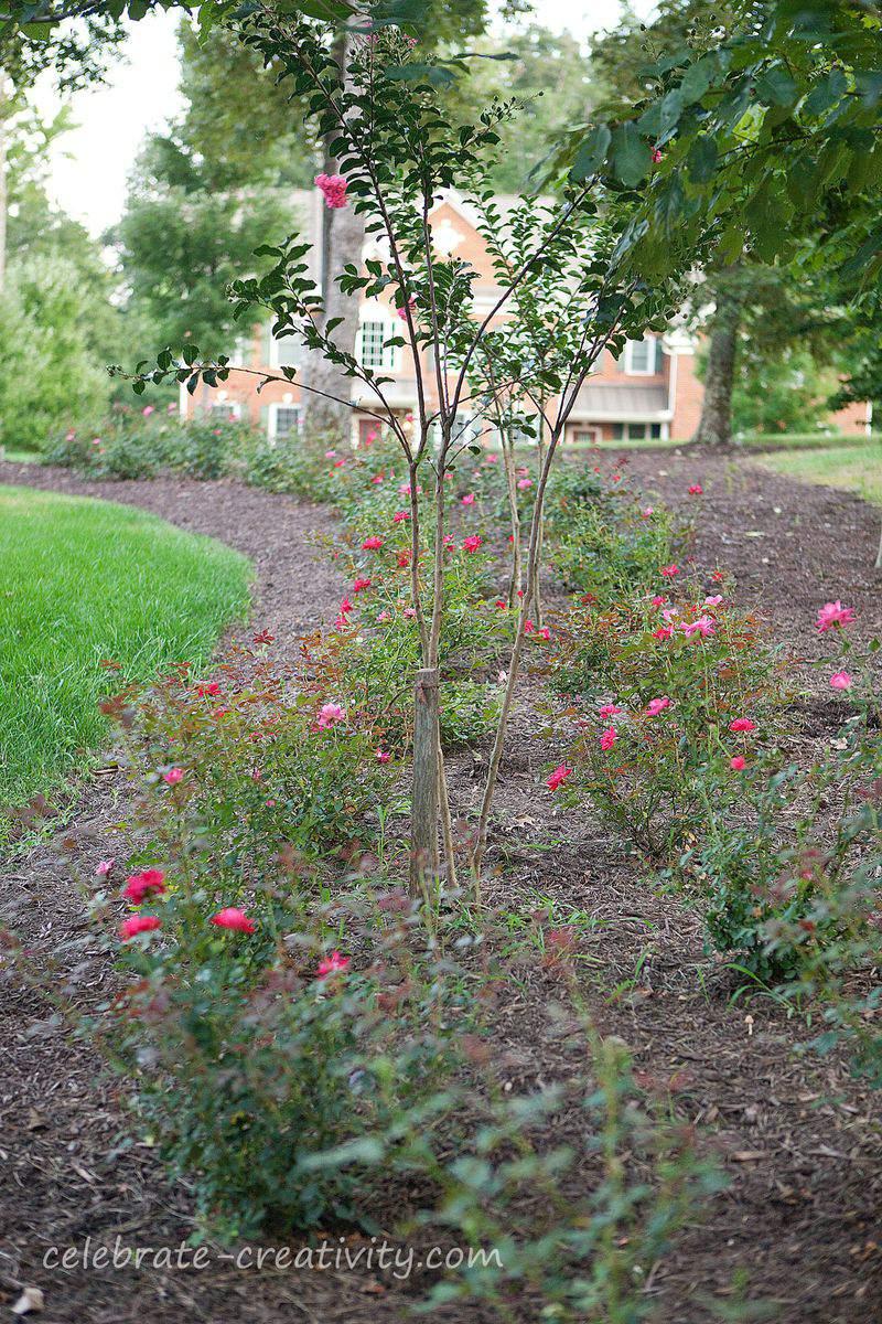 Blog-roses-update