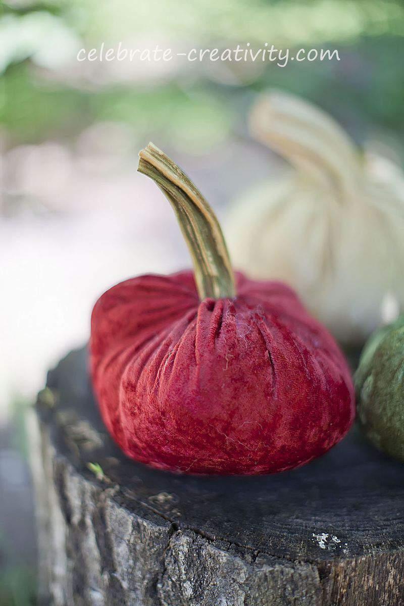 Velvet pumpkins4