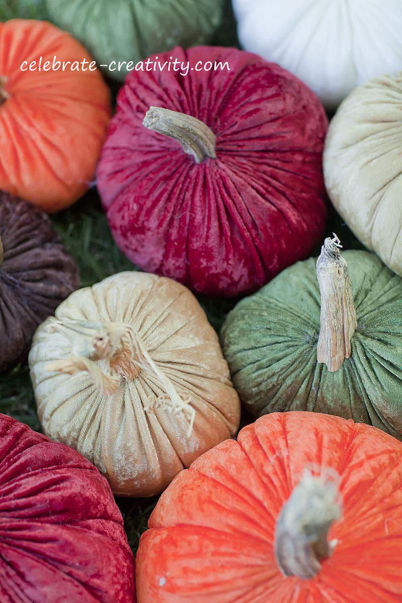 Velvet pumpkins9