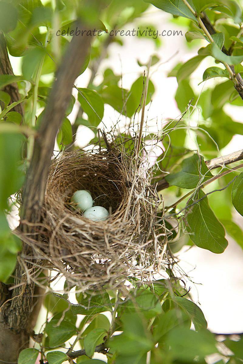 Birds nest roses