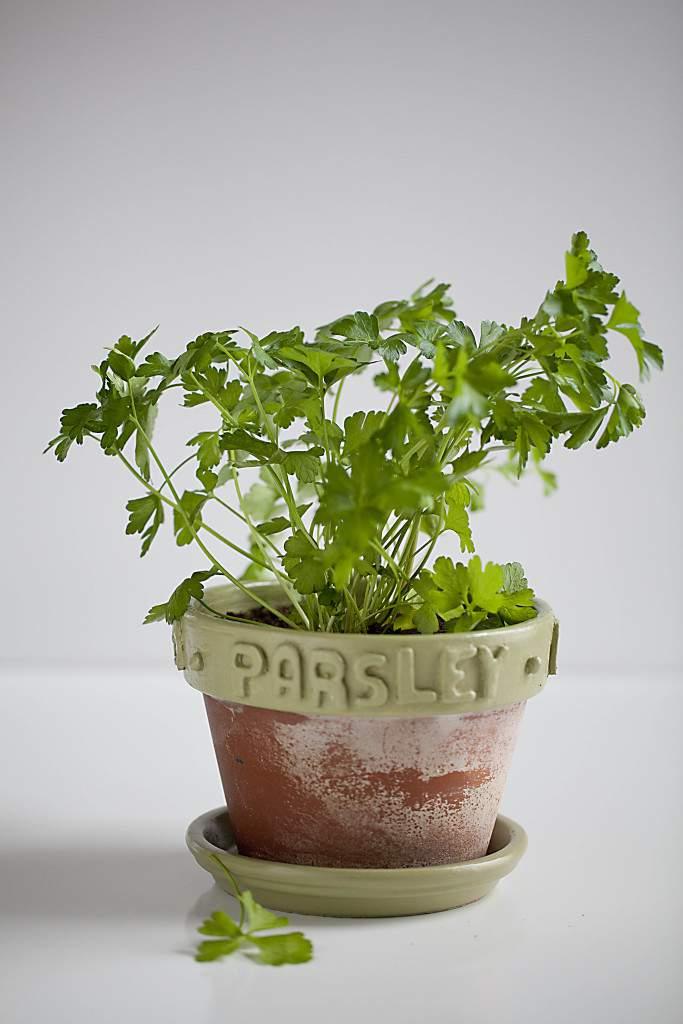 ec herb pots7