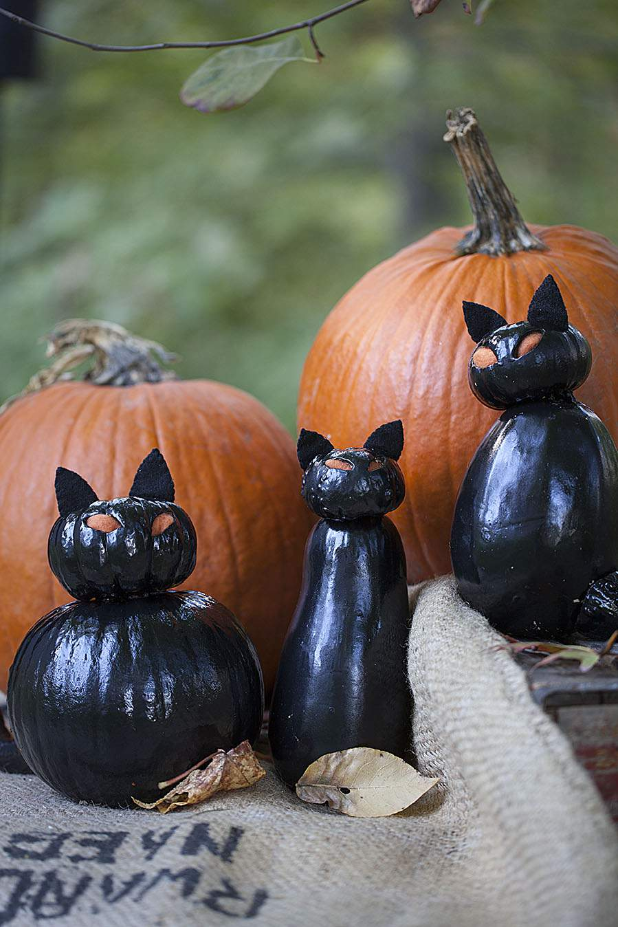 Celebrate creativity for Cat carved into pumpkin