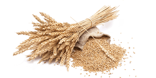 wheat sack online image