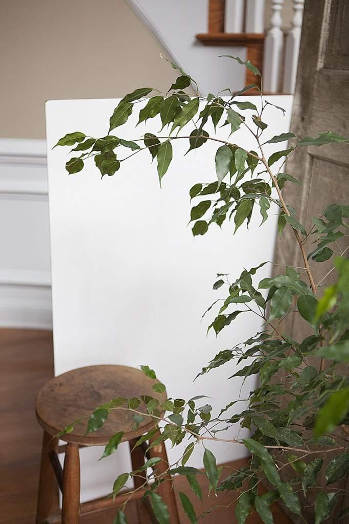pavlova white board