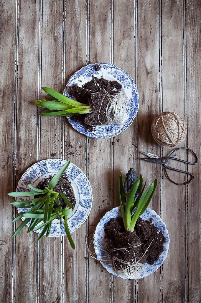 hyacinths trio