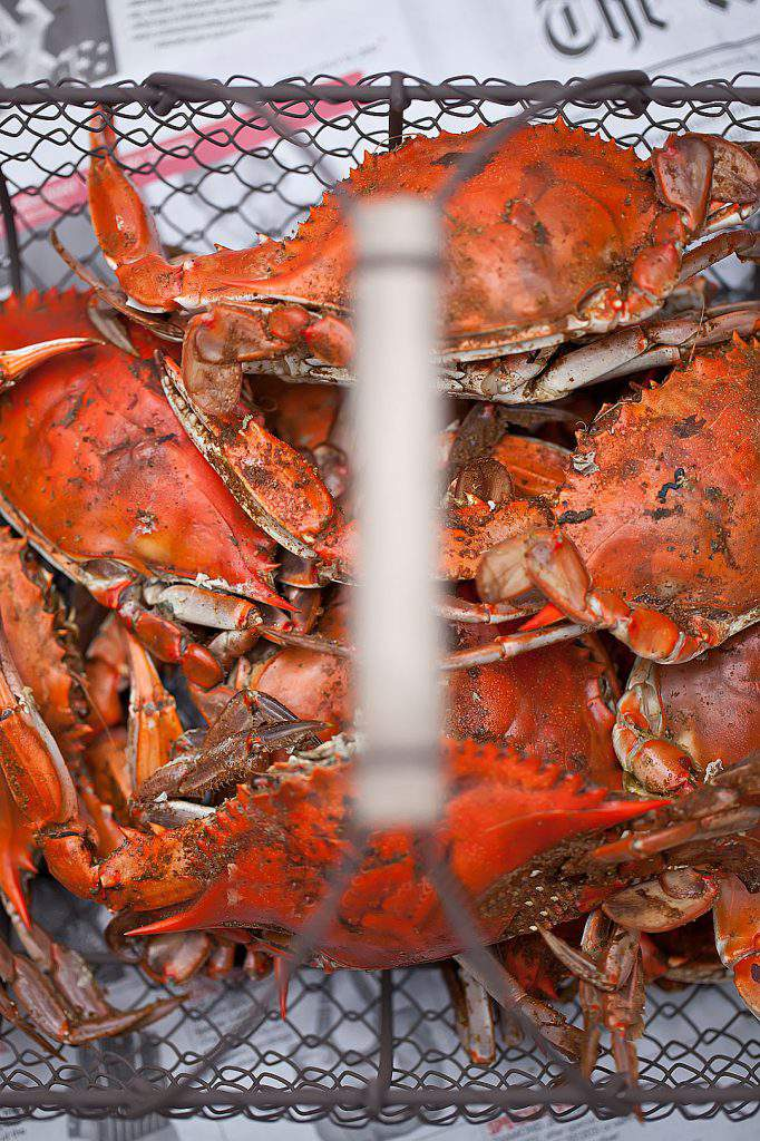 crabs in a basket