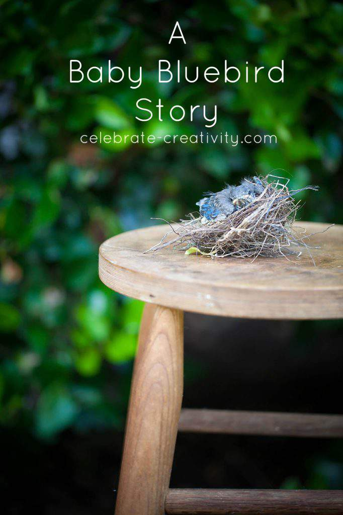 baby bluebird story