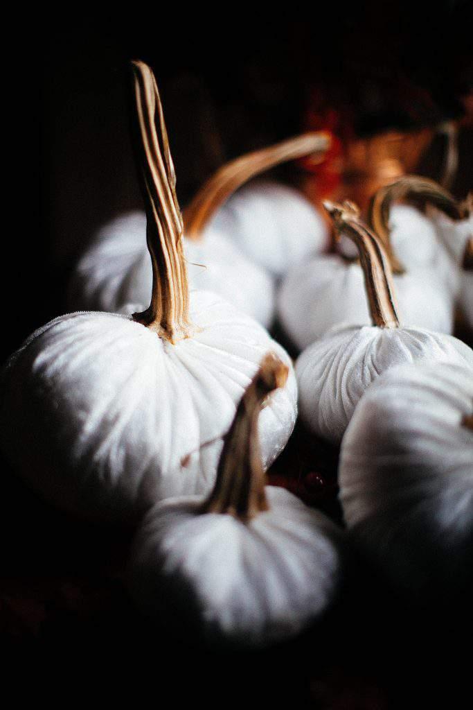 white velvet pumpkiins