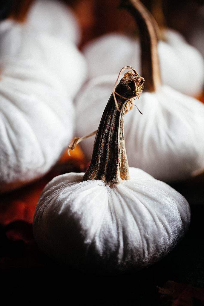 single white velvet pumpkin