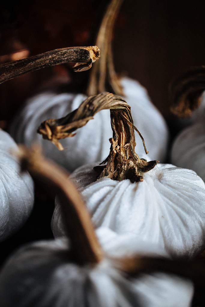 white velvet pumpkin crooked stem