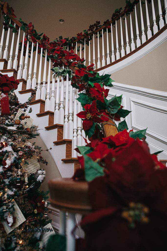 poinsettia bannister