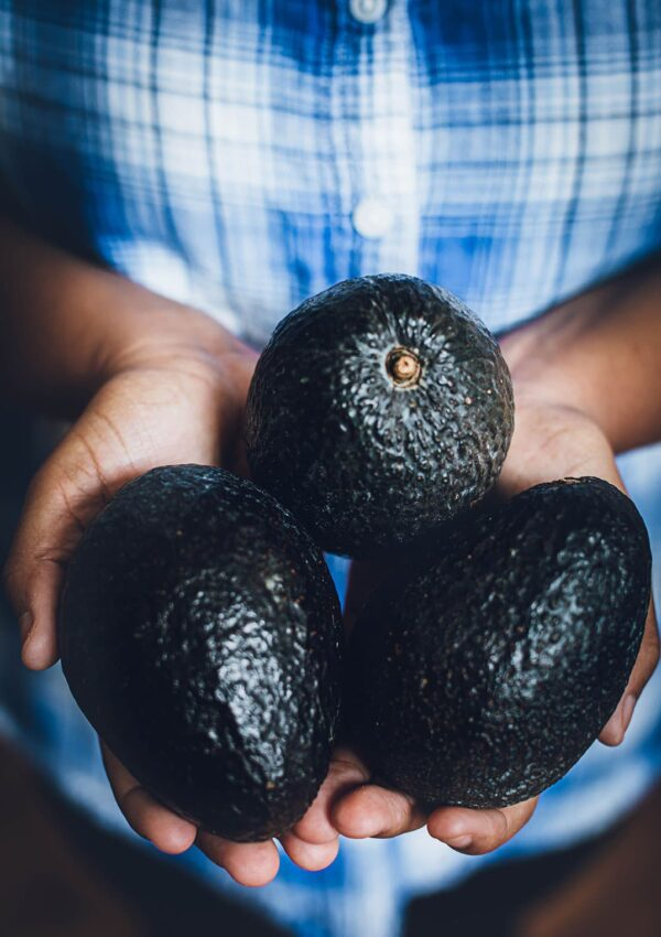 How to Root Avocado Seeds